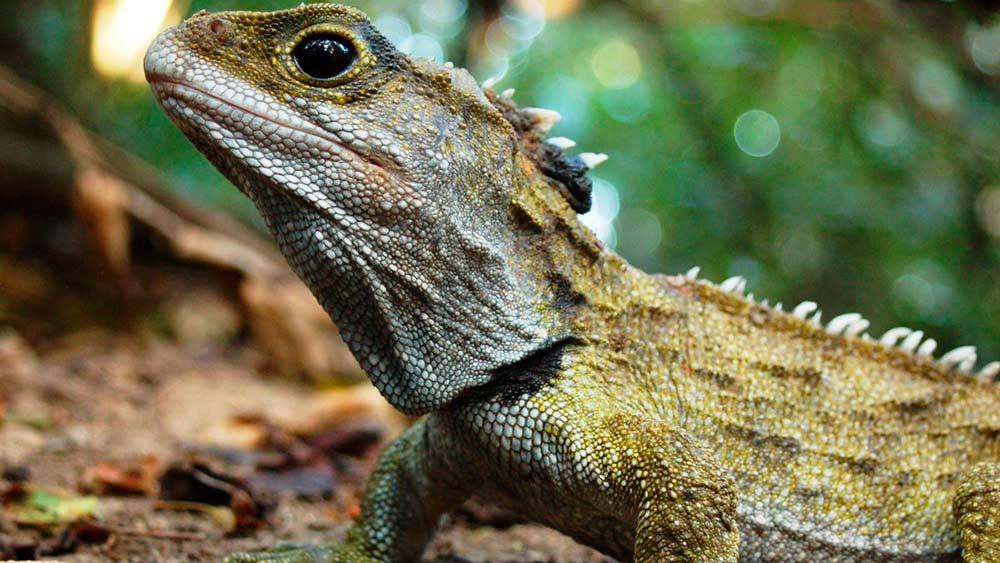 ТОП-10 самых долгоживущих животных на нашей планете